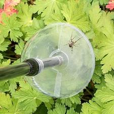 September spinnenmand - spinnenvanger