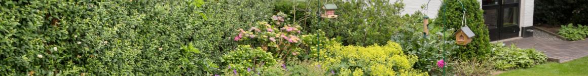 Planten in een diervriendelijke tuin