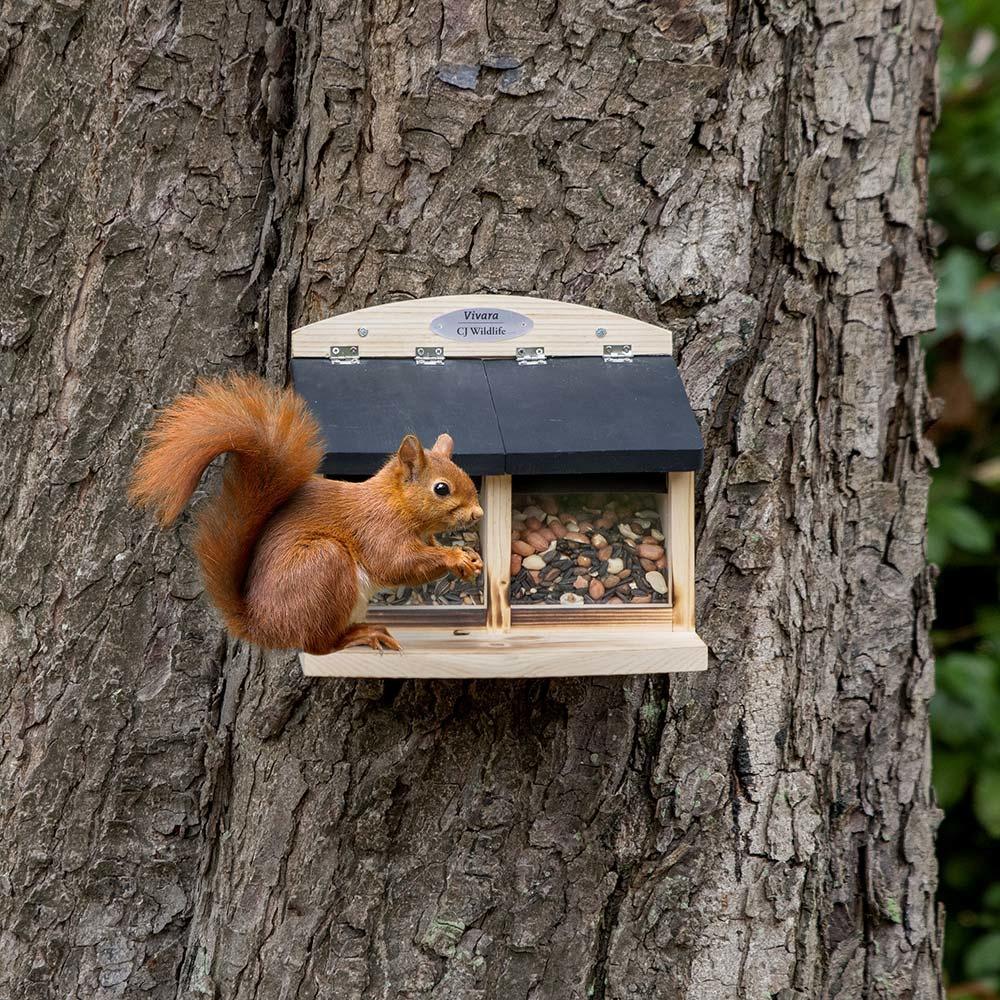 Dubbel eekhoornvoederhuis Galiano