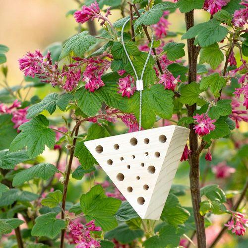 Insectenblok Malpelo