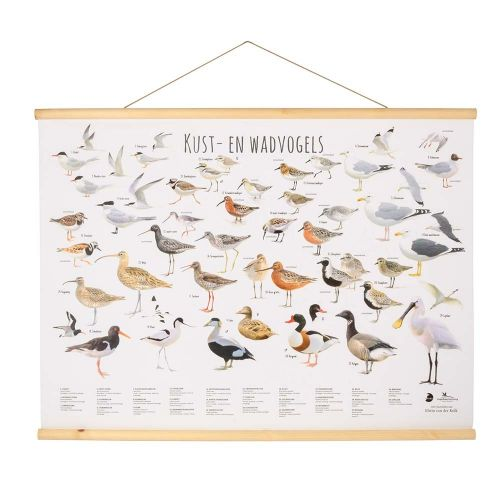 Wandposter Waddenvogels - Elwin van der Kolk