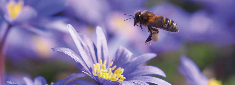 Nieuw - Biologische bloembollen! Ontdek hier ons hele aanbod.