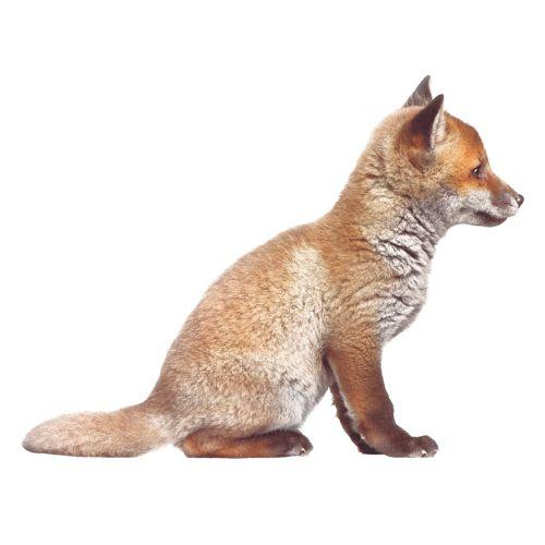 KEK muursticker 'Forest Friend' Jong vosje