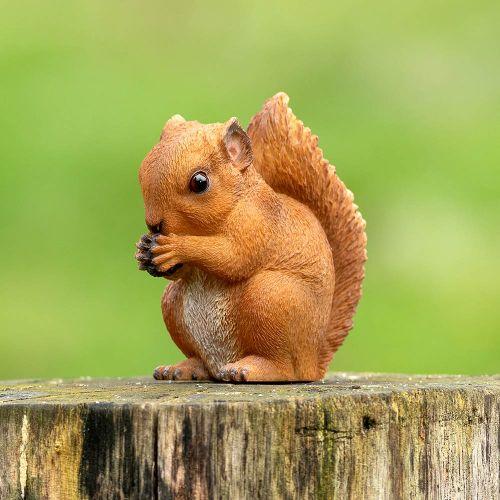 Rode baby eekhoorn