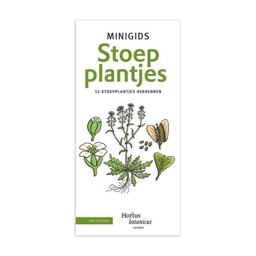 Minigids - Minigids Stoepplantjes