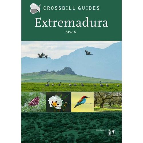 Crossbill Guide Extremadura Spain