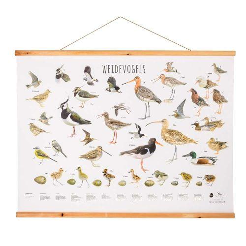 Wandposter Weidevogels - Elwin van der Kolk