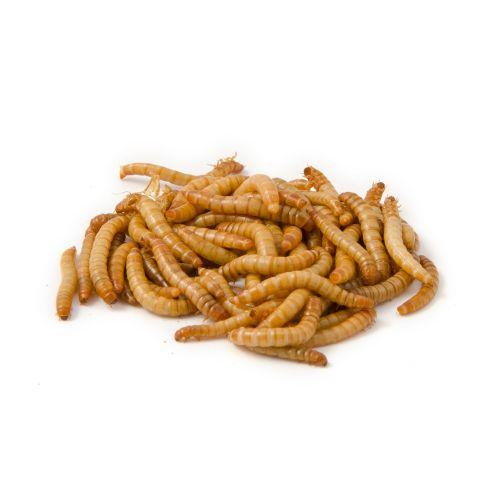 Levende meelwormen 100 gram