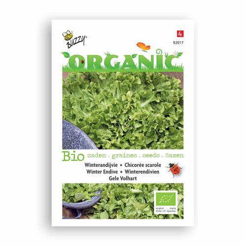 Buzzy® Organic Andijvie gele Volhart  (BIO)
