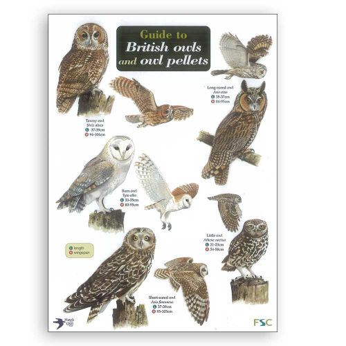 British Owls And Owl Pellets