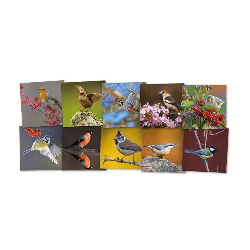 Wenskaarten Tuinvogels 10 stuks