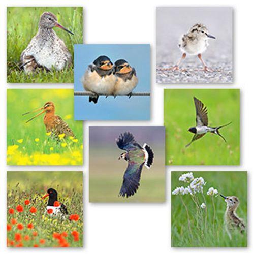 Wenskaartenset Weidevogels
