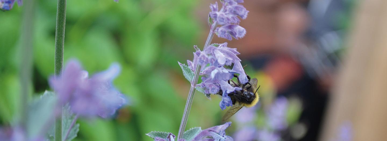Help de insecten met onze maandaanbiedingen van mei!